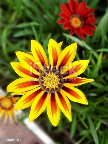 Close up of a beautiful yellow flower