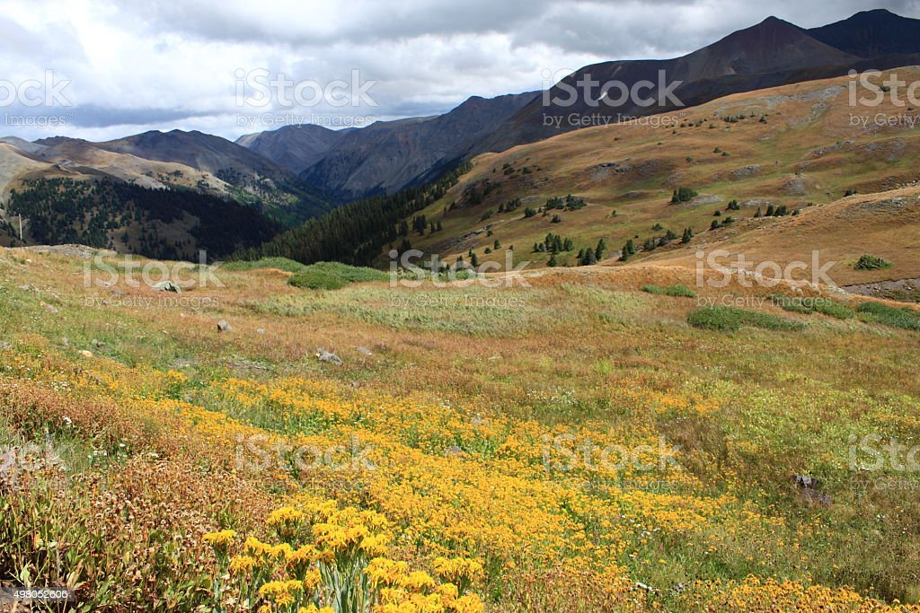 Bright Yellow Flowers In Rocky Mountain Valley Stock Photo ...