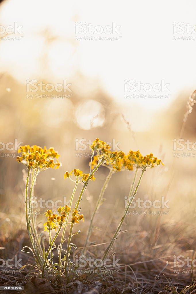 Jasne żółte kwiaty – zdjęcie