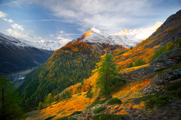 Bright yellow larch in the Alps stock photo