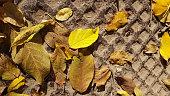 Beauty of fall season. Autumnal foliage backdrop. Fall grunge texture.