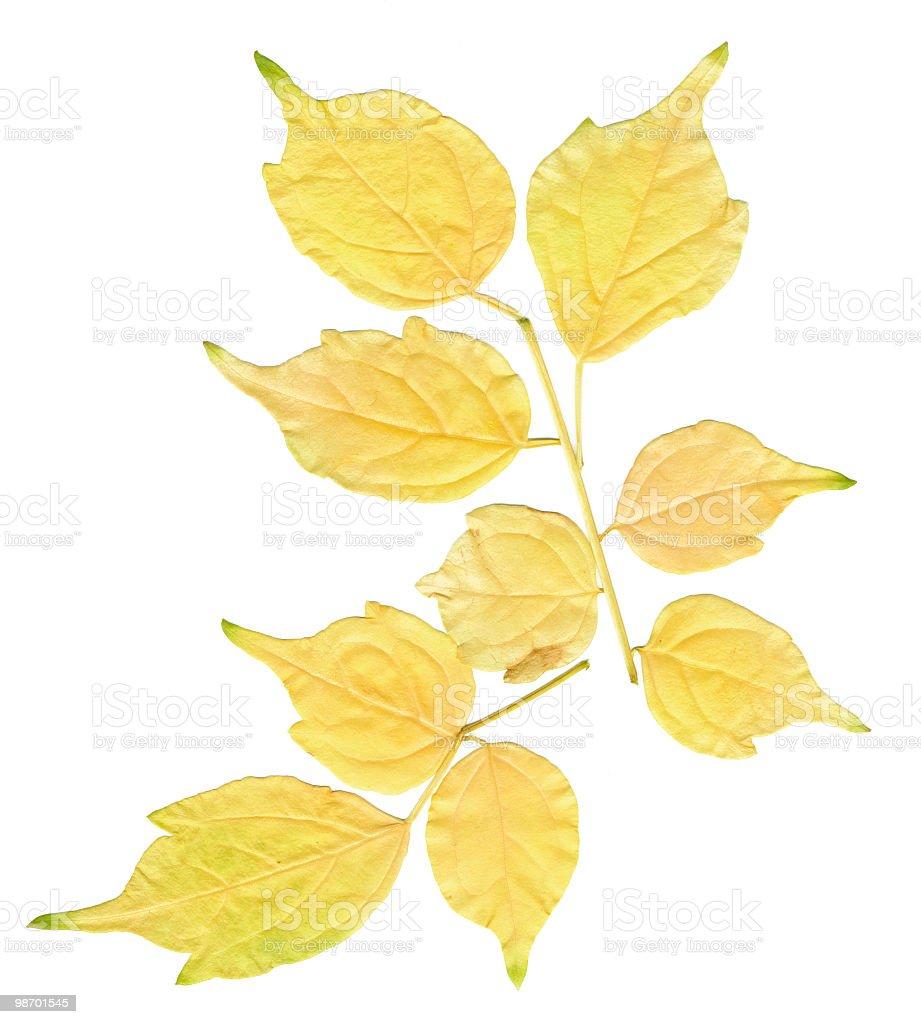 밝은 옐로우 잎 royalty-free 스톡 사진