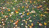 Bright yellow orange copper fallen leaves on the ground.  Beginning of cold season. Beauty of nature in the fall. Beautiful autumn landscape background. Dreams of the future, golden days and happiness