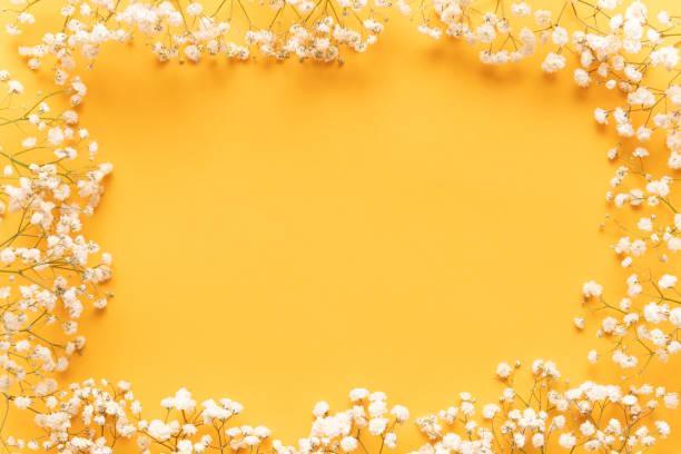 Leuchtend gelben Papier Hintergrund mit weichen kleine weiße Blüten, willkommen Frühling Konzept. Glücklich Muttertag, Frauen Tag, Valentinstag oder Geburtstag Gruß Kartenvorlage. – Foto