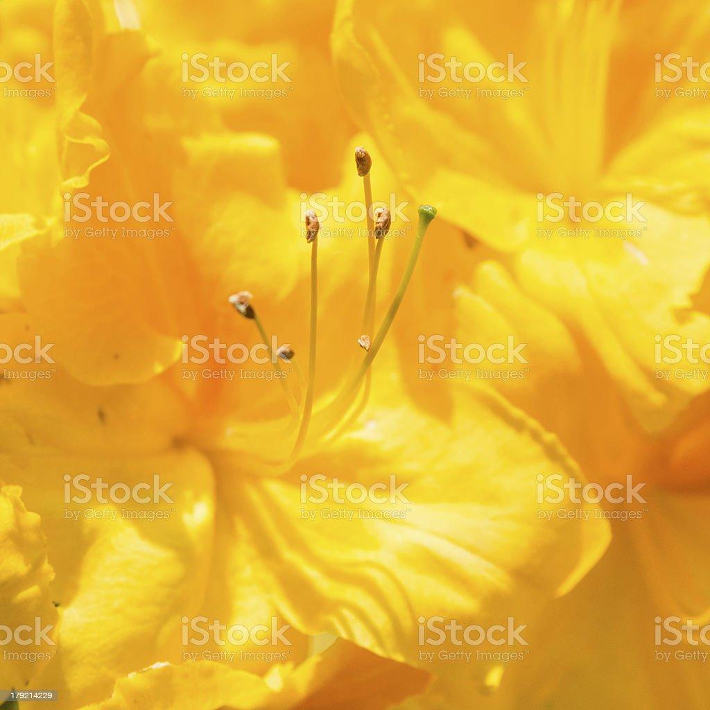 Bright Yellow stock photo