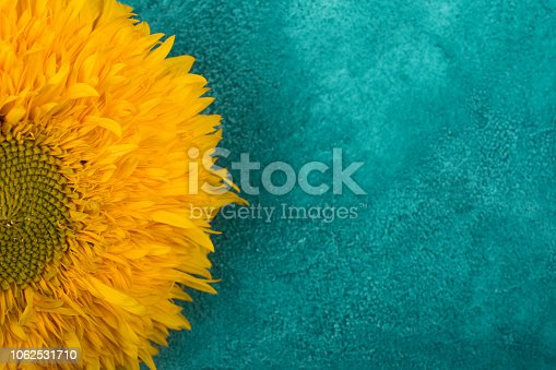 Bright yellow sunflower on a blue and green marble background (copy space on the right for your text)