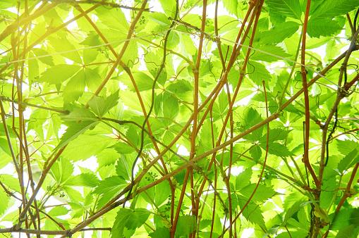 밝은 젊은 녹색 경 엽 추상적인 배경입니다 0명에 대한 스톡 사진 및 기타 이미지