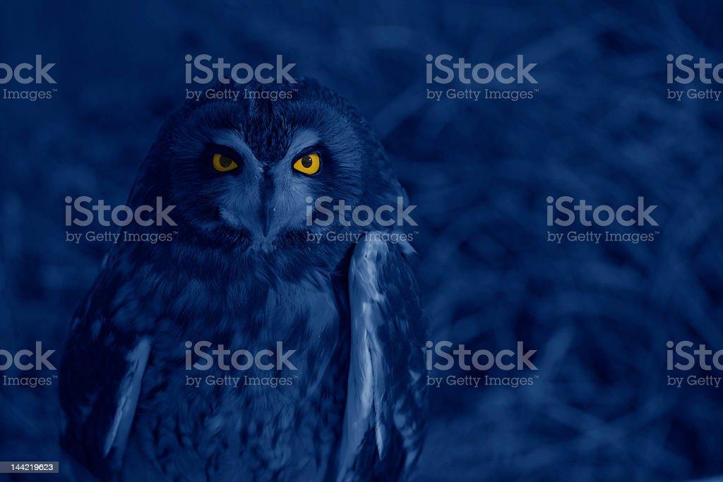 Bright-eyed owl at night stock photo