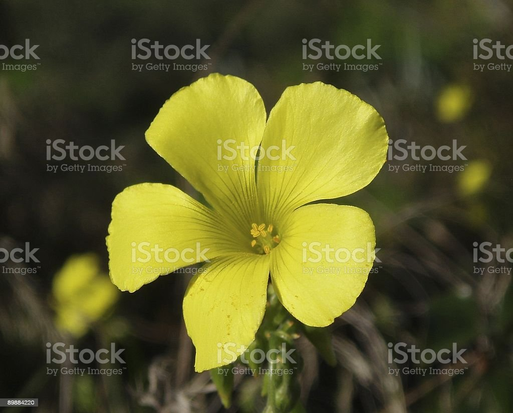 bright-flower royalty-free stock photo
