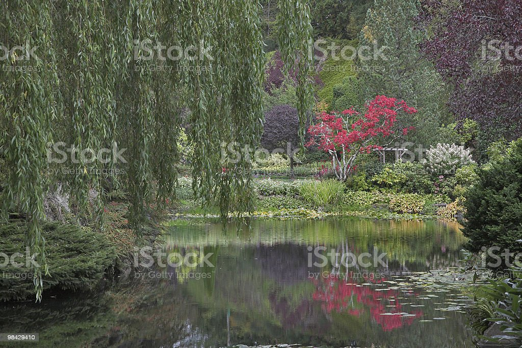 Brightly blossoming tree. royalty-free stock photo