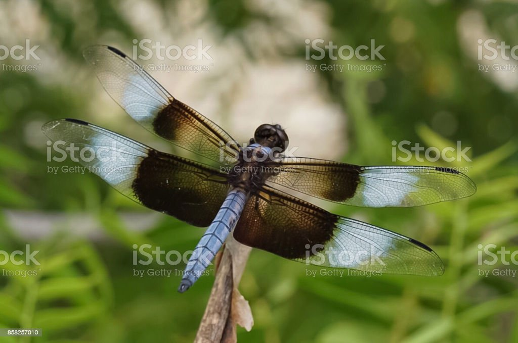 A brightly colored dragonfly perched on a branch stock photo