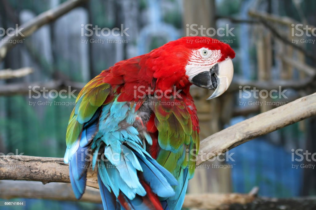 Brightly colored parrot stock photo