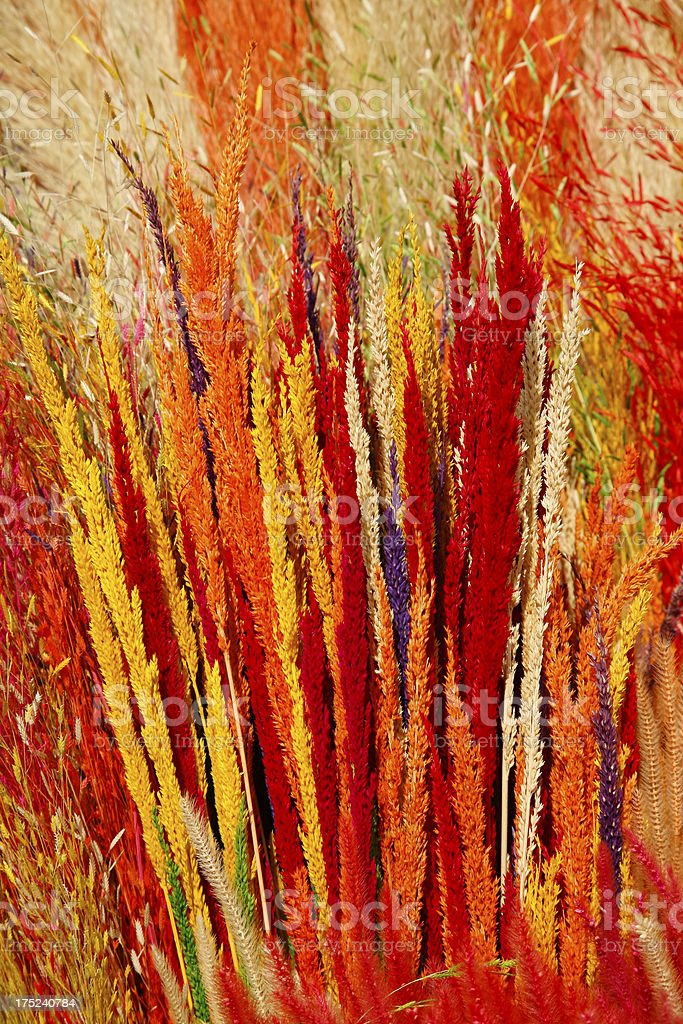 Brightly coloured New Year (TET) decorations stock photo