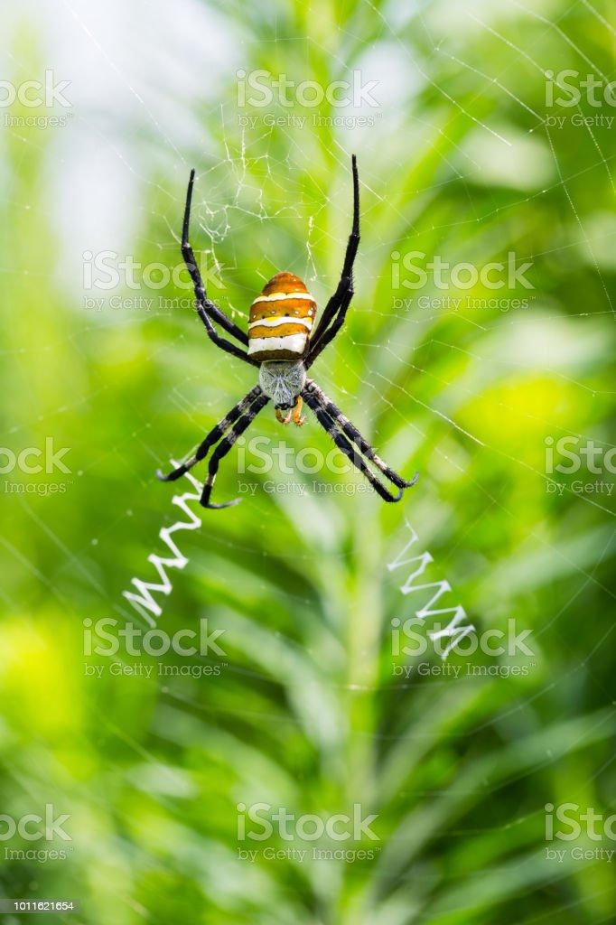 closeup de aranha colorida Vespa - foto de acervo