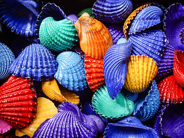 Brightly painted Shells foto