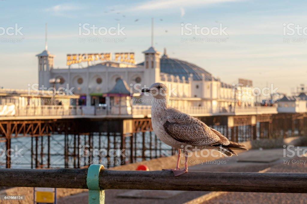 Brighton Pier and a Seagull stock photo