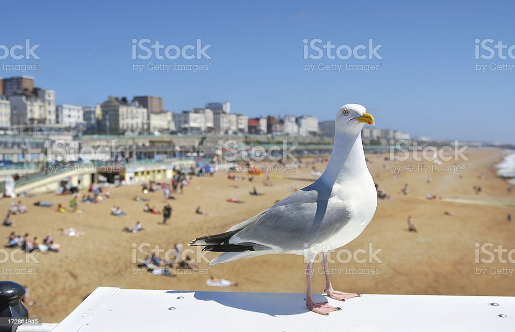 Brighton Seagull stock photo