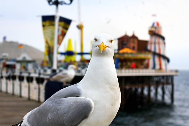 Brighton seagull stock photo
