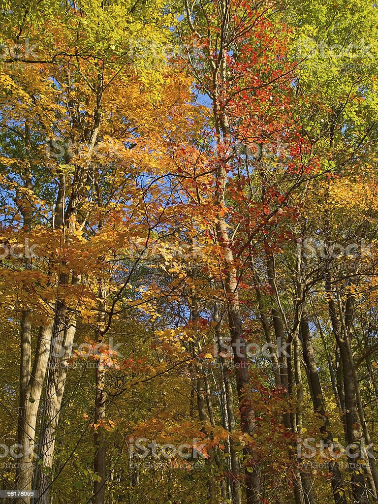 Brilliant Autumn royalty-free stock photo