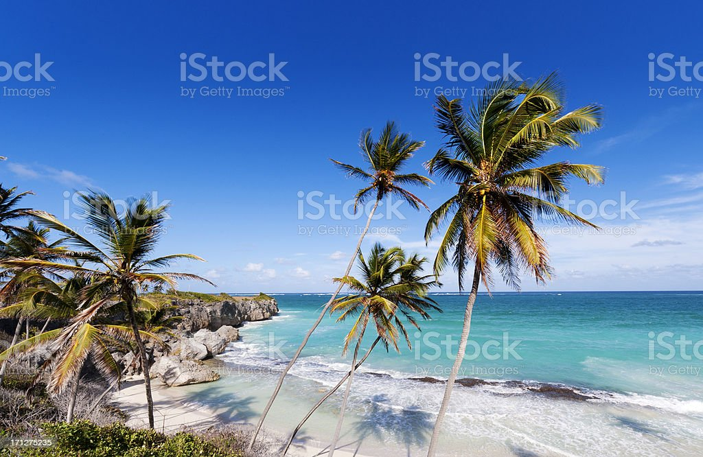 Brilliant blue sky, clear waters and palm trees. stock photo