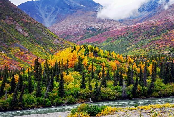 brilliant color on alaskan mountain - denali national park bildbanksfoton och bilder