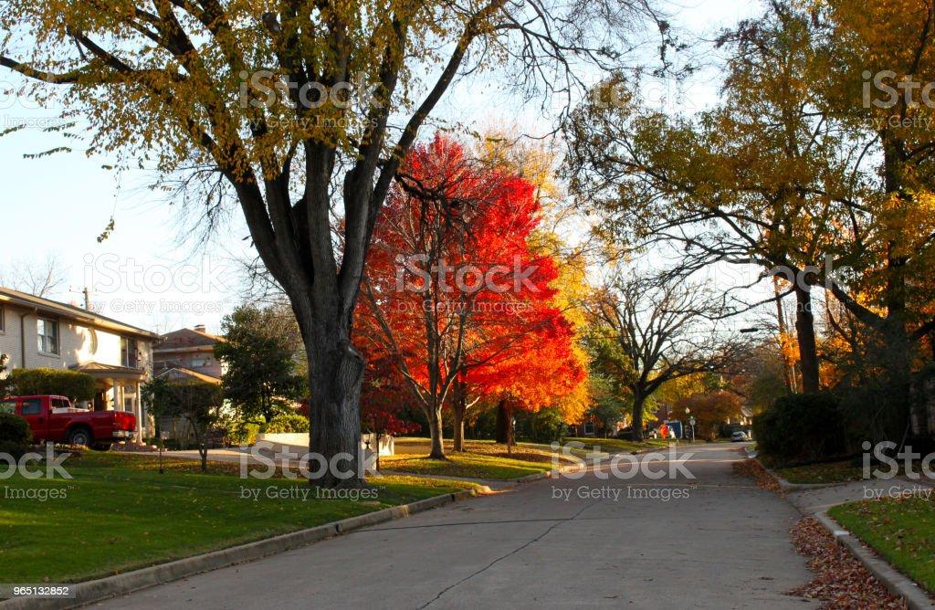 Brilliant Fall Trees in Neighborhood With Red Truck zbiór zdjęć royalty-free
