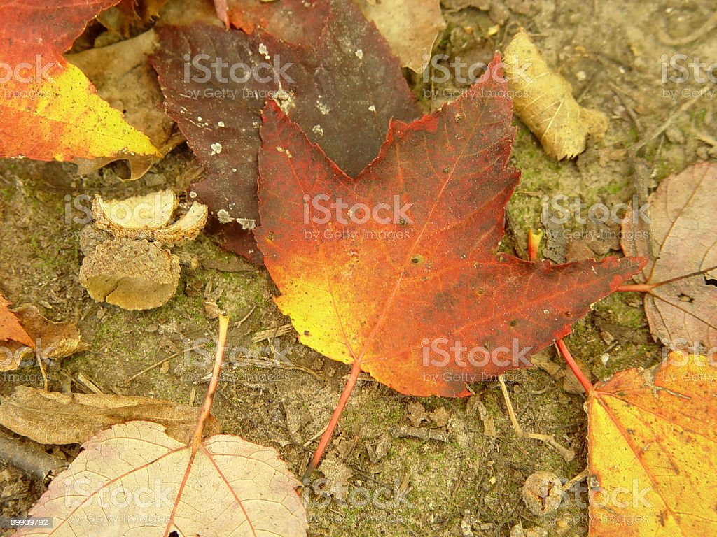 Brilliant Leaf On The October Ground stock photo