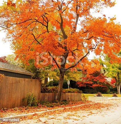 Brilliant Orange Maple Tree On Traditional Neighborhood Street With Colorful Leaves On The Ground - Stockowe zdjęcia i więcej obrazów Architektura