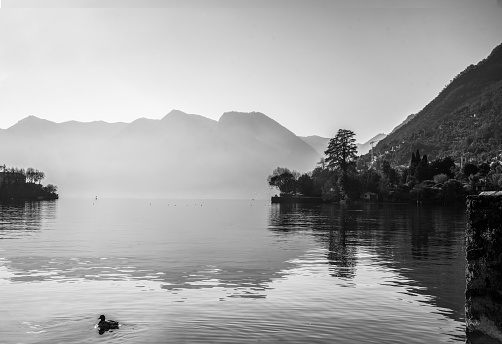 Brilliant panorama on lake Como at sunny day in winter r . Duck swimming. At right  part - houses and church on coast in some villages.  Stylized in black and white.