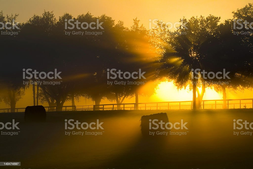 Brilliant Sunrise rays through trees series royalty-free stock photo