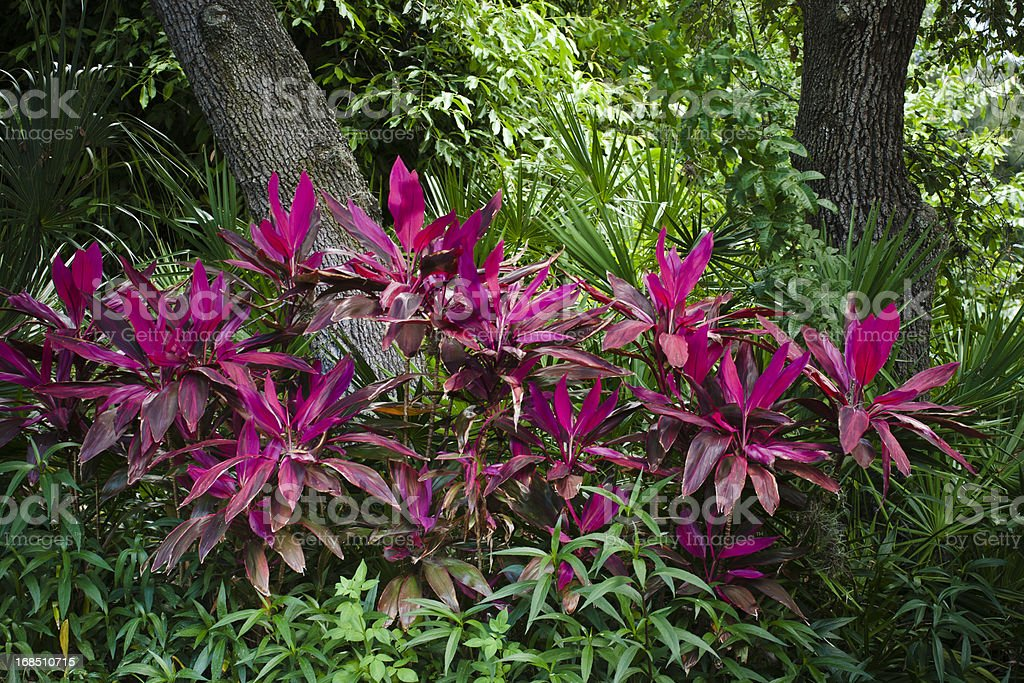 Brilliant Tropical Foliage royalty-free stock photo