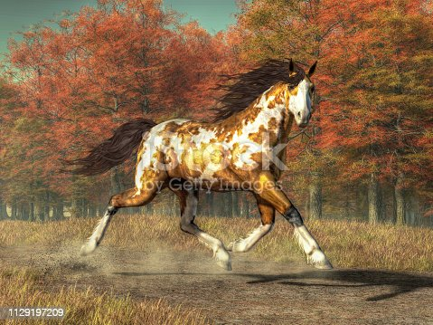 A pinto mustang with an overo patterned coat trots along a country road. It's Fall and the forest at the side the road is bright with the reds and golds of autumn colored leaves. 3D Rendering