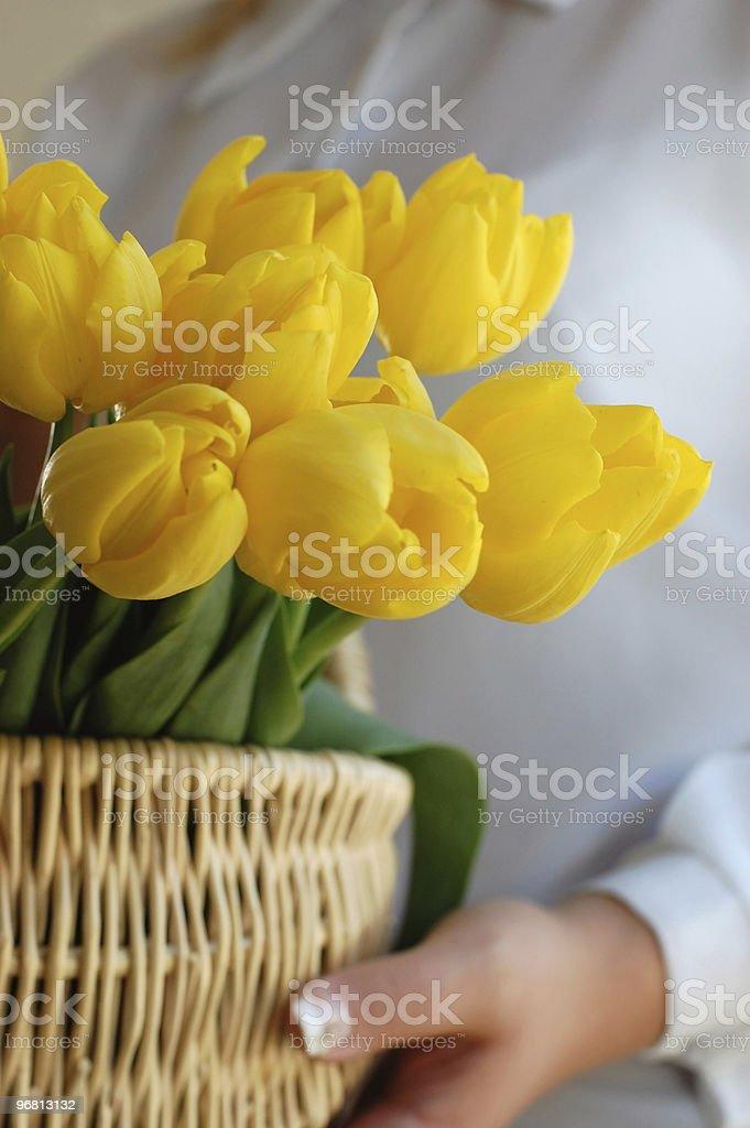 Bringing Tulips royalty-free stock photo