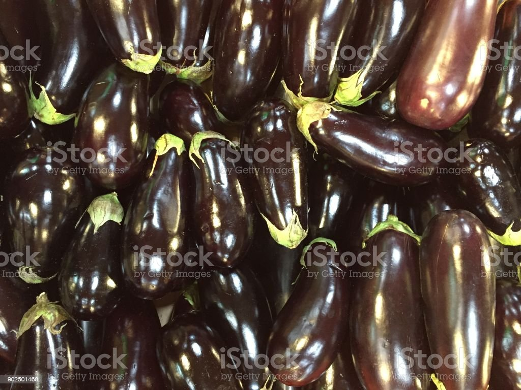 Brinjals or Eggplant stock photo