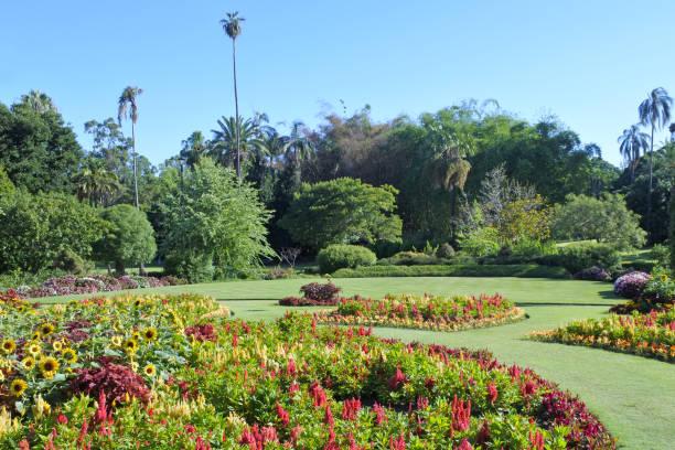 Brisbane botanic gardens picture id1090321346?b=1&k=6&m=1090321346&s=612x612&w=0&h=2ghqpgqy2kftz36f3fjggvhubjbhljunck s2z5c4oq=