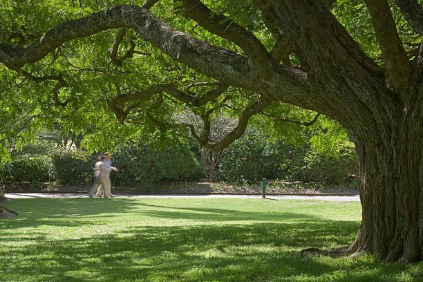 Brisbane Botanical Gardens stock photo