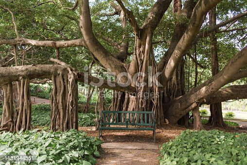 Brisbane City Botanic Gardens large fig tree with sprawling branches and secret tranquil bench chair to sit for picnic or quiet reflection