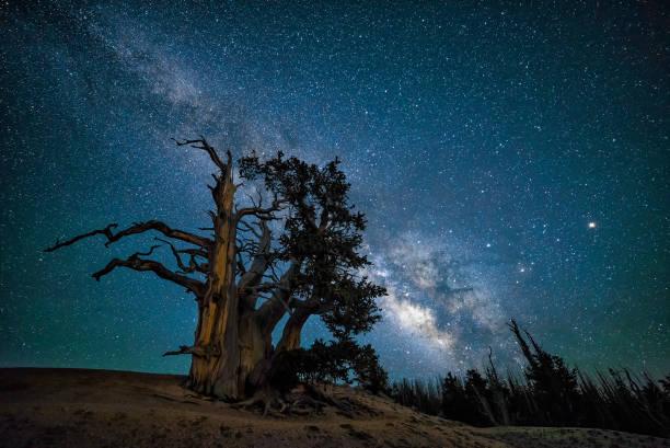 Bristlecone Pine and night sky stock photo
