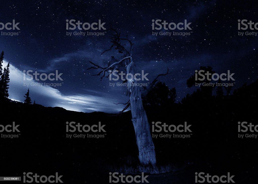 Bristlecone pine tree under a starry night sky royalty-free stock photo