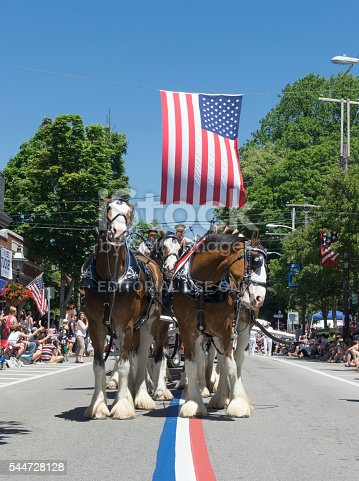 Bristol, Rhode Island, USA - July 4, 2016: Clydesdale horses pass down Hope Street during Bristol's 231st July 4 parade. Bristol's parade is generally considered to be the oldest July 4 parade in the United States.