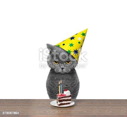 istock British cat celebrating birthday with piece of cake 519087864
