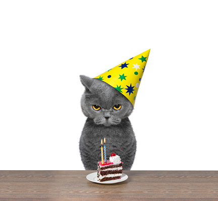 Cat celebrating birthday with piece of cake -- isolated on white background