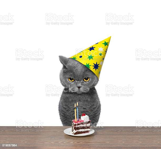 British cat celebrating birthday with piece of cake picture id519087864?b=1&k=6&m=519087864&s=612x612&h=hvjyz72z5vdlslgiijurjmbdzunjhd7ur csg2kh0w4=