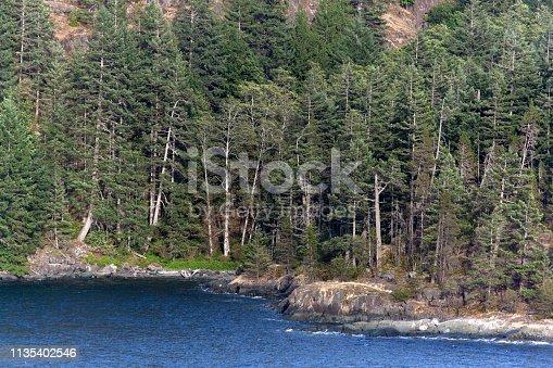 istock British Columbia Forest 1135402546