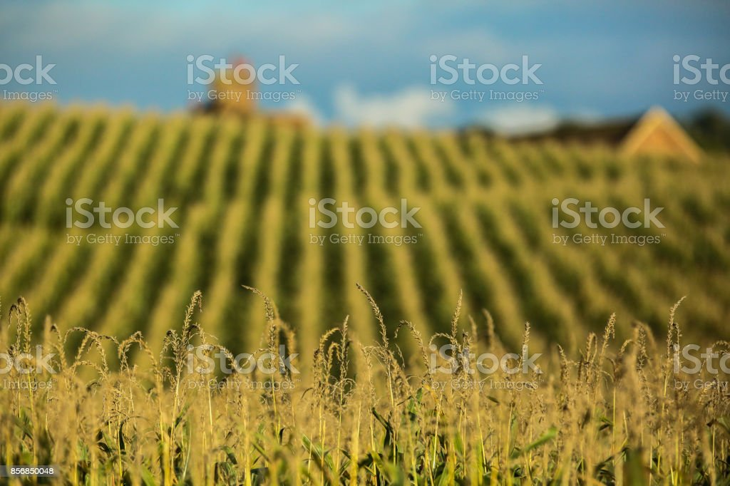 British Countryside stock photo