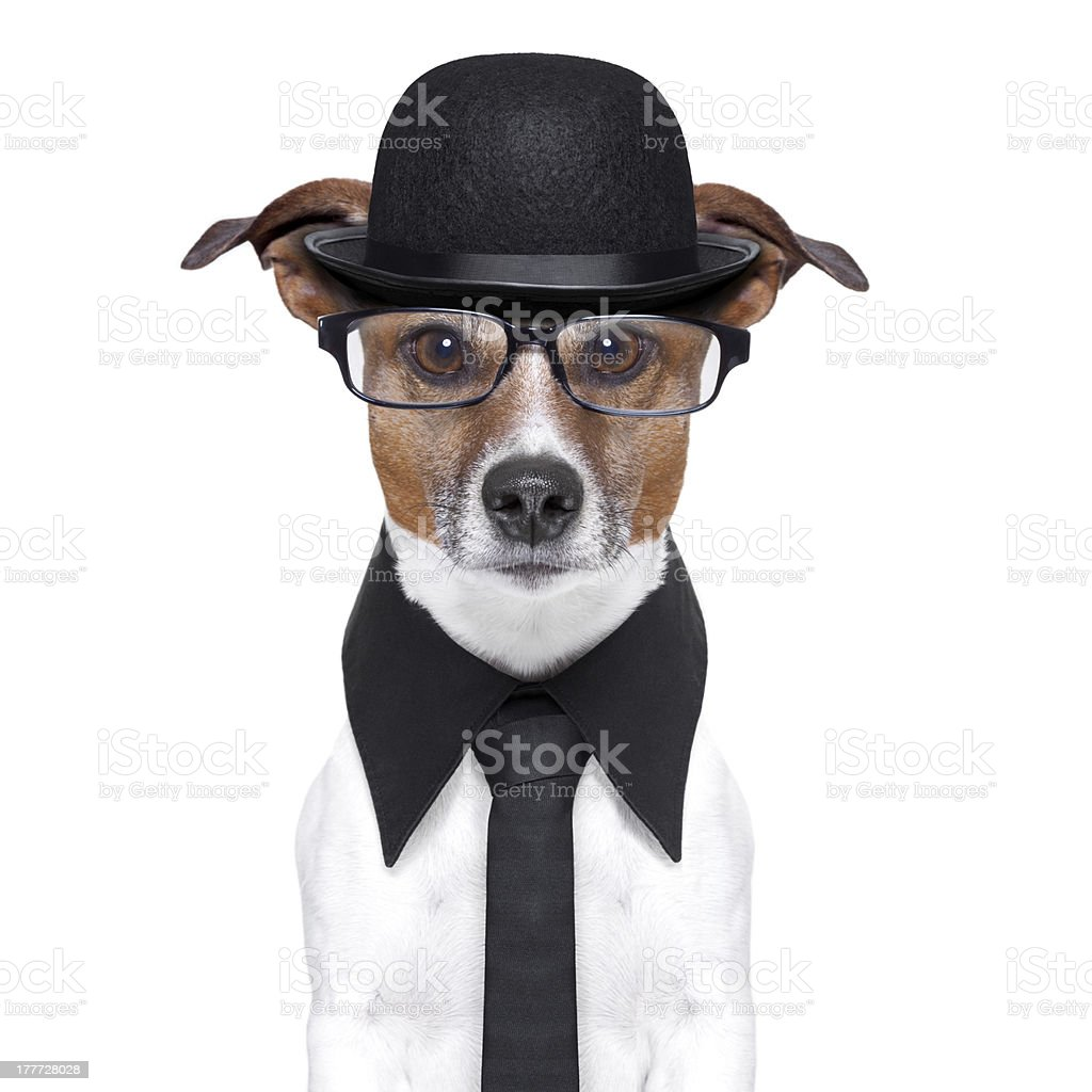 british dog stock photo