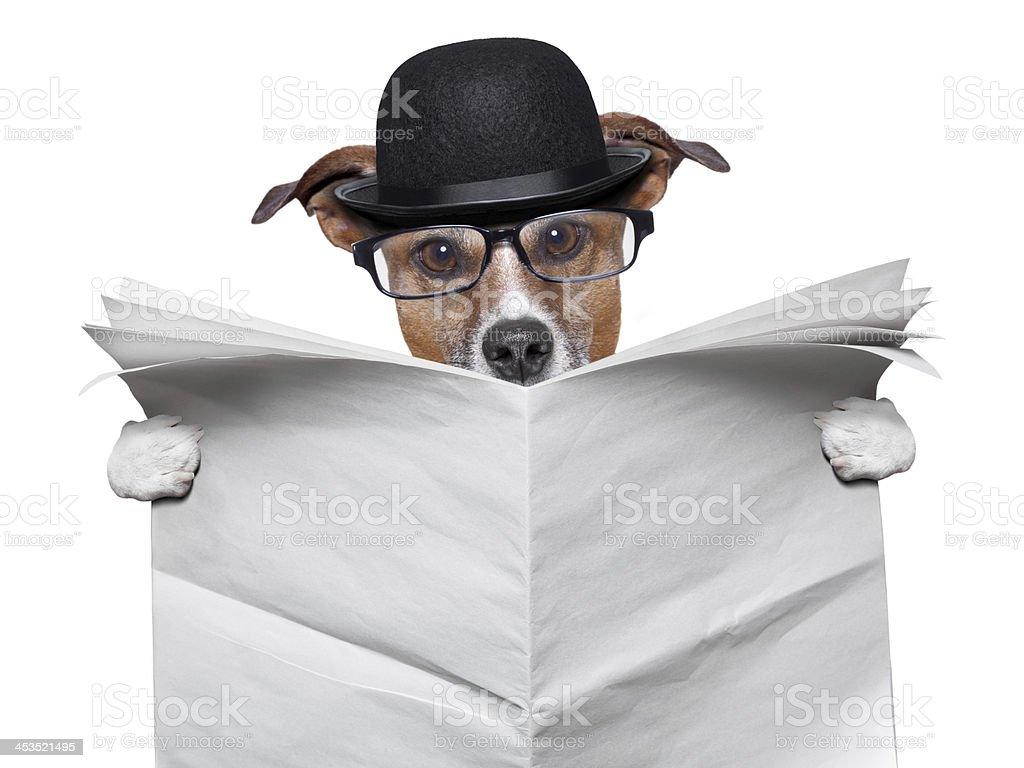British dog reading royalty-free stock photo