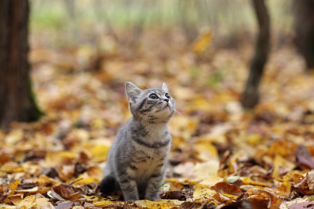 British mascota en otoño parque, caída de las hojas - foto de stock