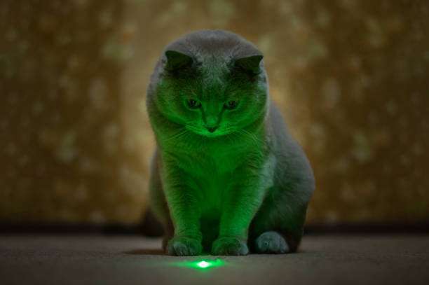 British lilac cat looks at a green speck from a laser pointer picture id1133037021?b=1&k=6&m=1133037021&s=612x612&w=0&h=b4le0e2xete44s4jg1aremgbpvtwayp 2odohi1ruo8=