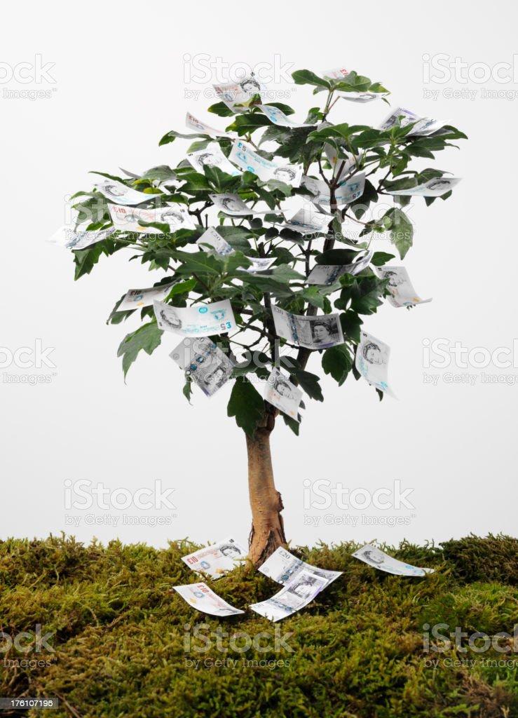 British Pound Notes on a Money Tree royalty-free stock photo